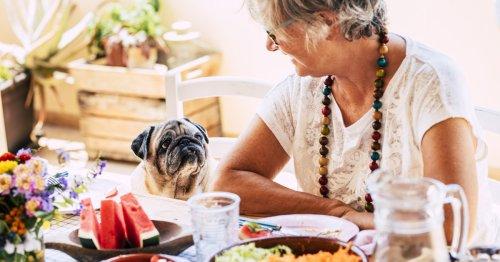 Cómo evitar que tu perro te pida comida sin parar