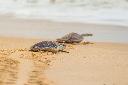Las tortugas más divertidas de Instagram