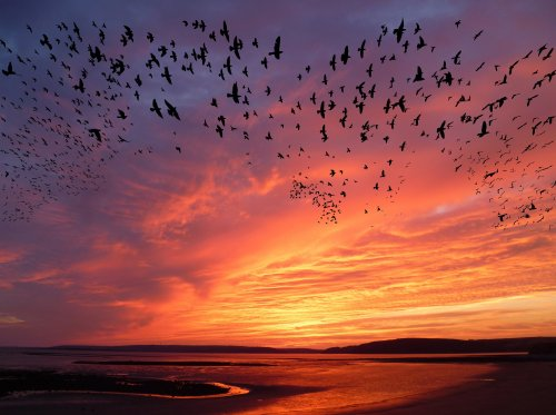 El cambio climático podría provocar que las aves migren a destiempo