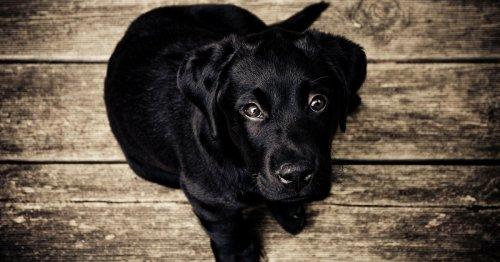 25 nombres para perros inspirados en estrellas de la música