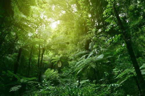 Cada seis segundos se pierde una superficie de selva tropical equivalente a un campo de fútbol