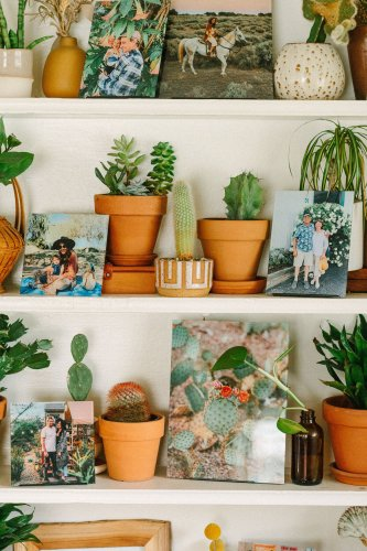 These 10 Houseplants Are the Easiest to Grow—We Promise
