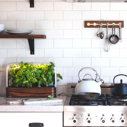 How to Establish a Flourishing Herb Garden in Your Kitchen