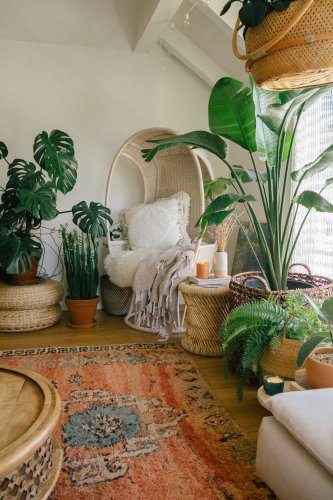 11 Large Indoor Plants That Make a Big Statement