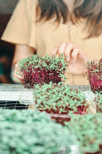 Everything You Need to Know About Growing Your Own Microgreens