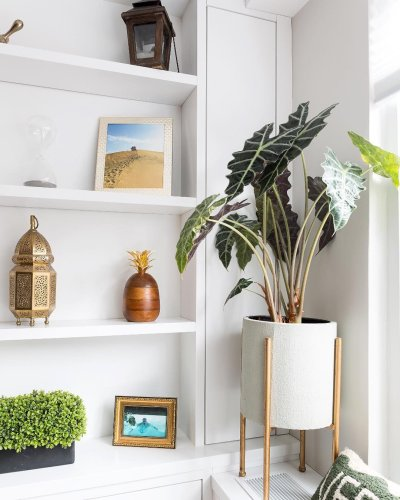 15 of the Most Popular Houseplants to Pick Up ASAP