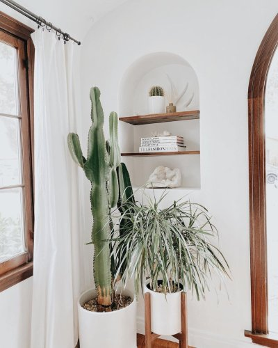 10 Cactus Plants to Add to Your Indoor Collection