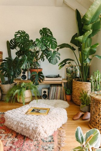 Everything You Need to Know About Growing Banana Leaf Plants