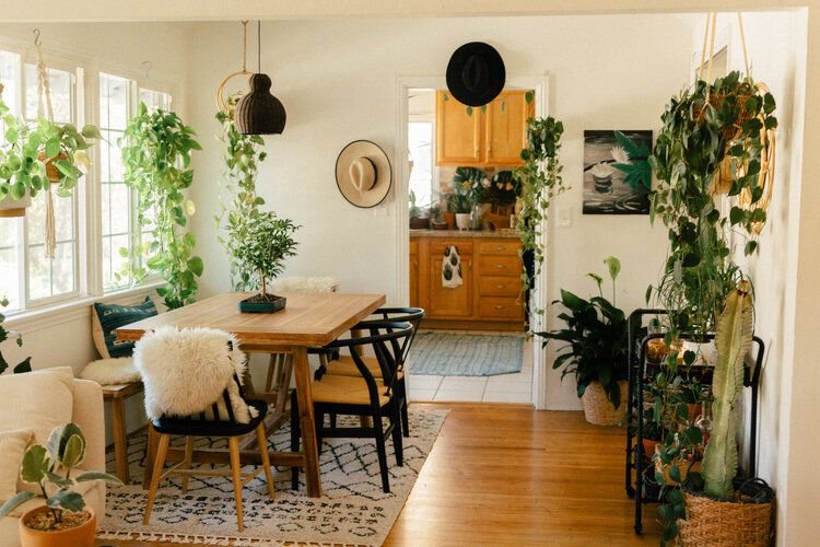 Here's How to Bring Plants Indoors This Winter