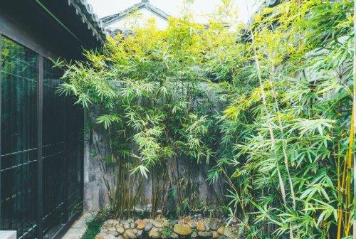 Die besten Pflanz- und Pflegetipps für den Bambus