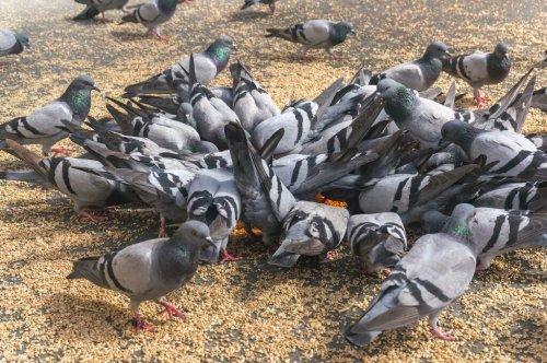 Zu häufiges Vogelfüttern kann man Bußgeld abgestraft werden