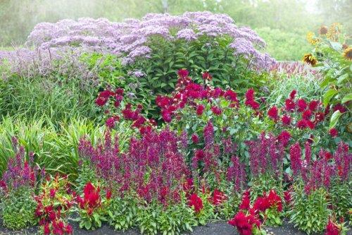 Riesenstauden im Garten pflanzen und richtig pflegen