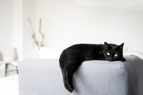 Wie gestalte ich meine Wohnung katzensicher?