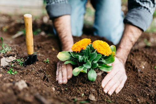 Woran man hochwertige Blumenerde erkennt