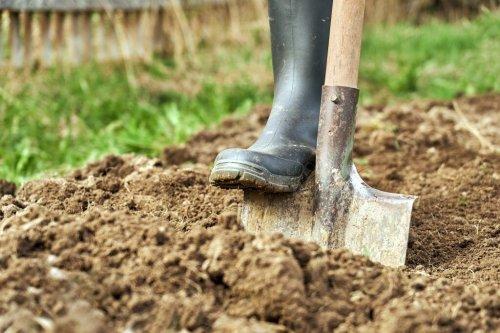 Pflanzen, die sich für einen lehmigen Boden eignen
