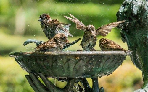 3 Fehler beim Aufstellen einer Vogeltränke
