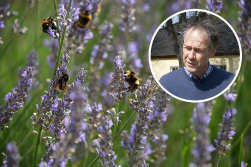 Insektenhotels und Saatgutmischungen helfen Bienen nur bedingt