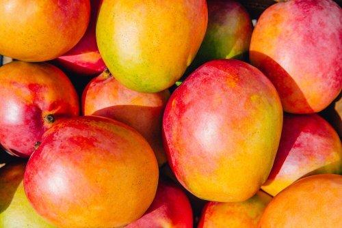 Kann man aus einem Mangokern eine Pflanze ziehen?