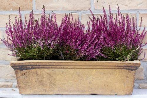 7 winterharte und farbenfrohe Pflanzen für draußen