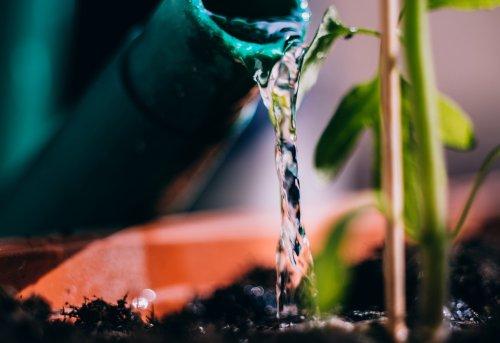 Einfache Methode, um Leitungswasser vor dem Gießen zu entkalken