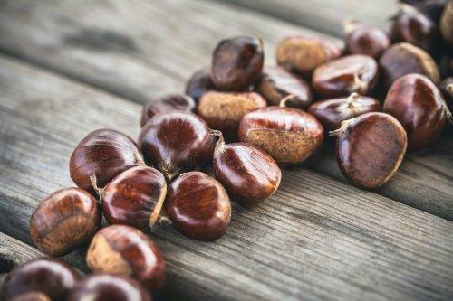 Kastanienbrühe – ein Geheimtipp gegen Blattläuse