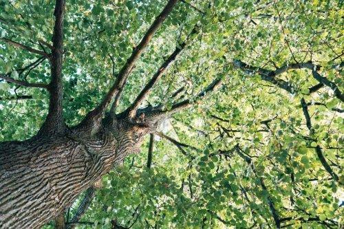 Wie hoch dürfen Bäume im Garten sein?