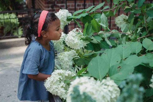 Touch, Taste, Smell…These Sensory Plants Will Transform Your Garden