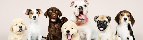 Helpful tips to keep your home pet-safe