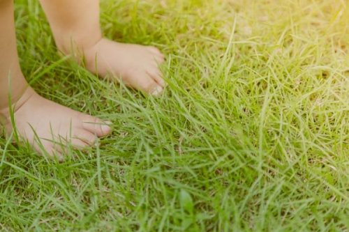 7 Ways to Maintain a Beautiful, Child-Friendly Lawn