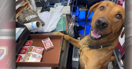Crafty Croydon canines sniff out 14,000 illegal cigs - and look very proud