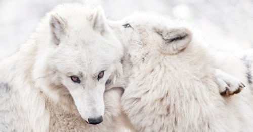 Wildlife Photographer Captures What Love Looks Like in the Animal Kingdom
