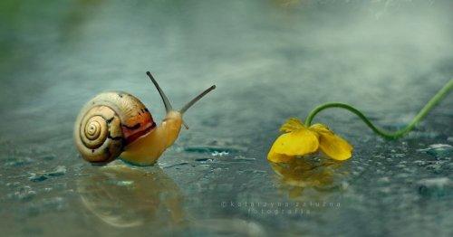Enchanting Bokeh Portraits Capture Rarely Noticed Beauty of Tiny Snails