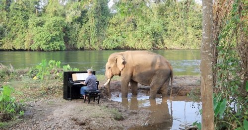 Concert Pianist Plays Classical Music For Rescue Elephant in Thailand