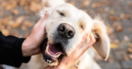 Study Shows That Petting a Dog Can Have Long-Lasting Health Benefits