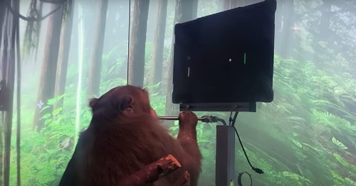 Monkey Plays Video Games Using Only Its Mind With Tech by Elon Musk's Neuralink