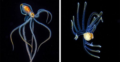 Marine Biologist's Blackwater Photos Uncover the Most Fascinating Creatures Hidden in the Ocean [Interview]