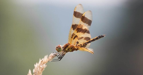 Incredible Dragonfly Photos Offer a Rare Look At Their Delicate Beauty