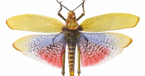 Smithsonian Takes a Look at the World's Most Interesting Insects