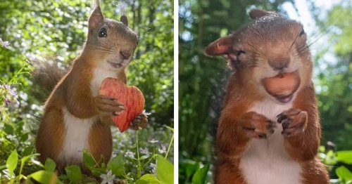 Swedish Wildlife Photographer Captures Intimate Images of Curious Red Squirrels