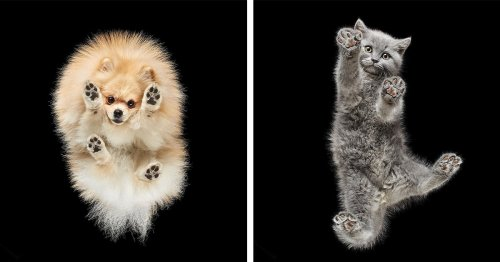 Pet Photographer Reveals How Adorable Dogs and Cats Look From Below
