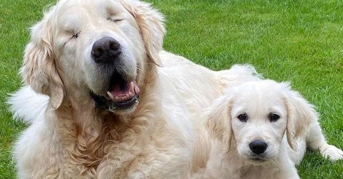 Blind Dog Gets His Own Adorable Guide Dog Who Doubles as His Best Friend