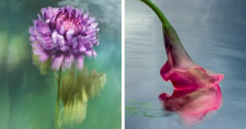Real Flowers Submerged Underwater Blur the Line Between Photo and Painting