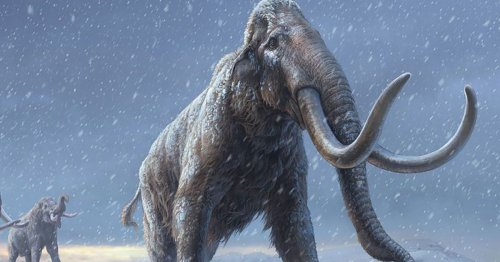 World's Oldest DNA Is Discovered in a 1.2-Million-Year-Old Mammoth