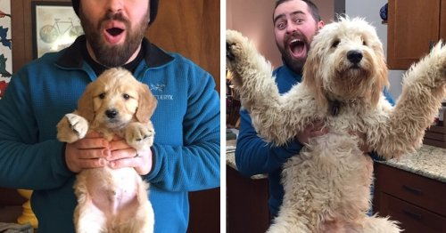 23 Adorable Then and Now Photos of Dogs Who Are the Same Puppies But Bigger