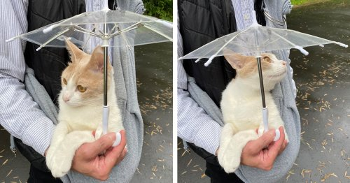 This Cat in Japan Loves Taking Rainy Day Strolls With His Custom Cat-Sized Umbrella