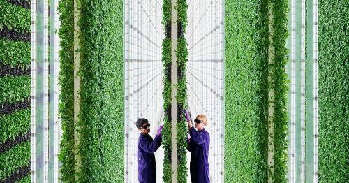 This 2-Acre Vertical Farm Is Managed by AI and Robots and Uses 99% Less Land