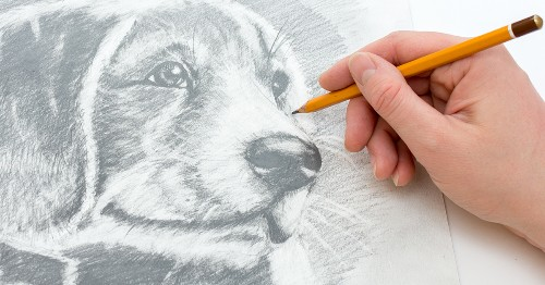 "10 ""How to Draw"" Books That Will Help You Sketch the Animal Kingdom"