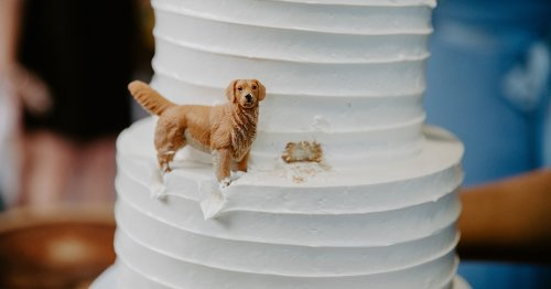 Adorable Wedding Cake Features Beloved Dog Making a Playful Mess