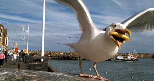 Google Buys Photographer's Perfectly Timed Photo of Seagull Eating a Fry