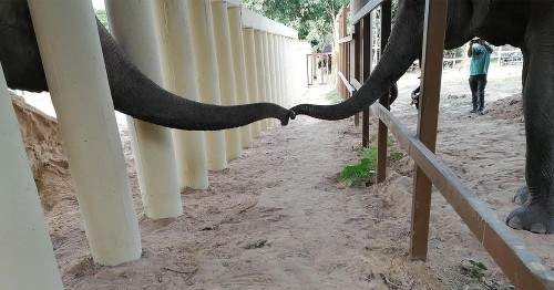 The World's Loneliest Elephant Is Finally Meeting New Friends After 8 Years in Solitude